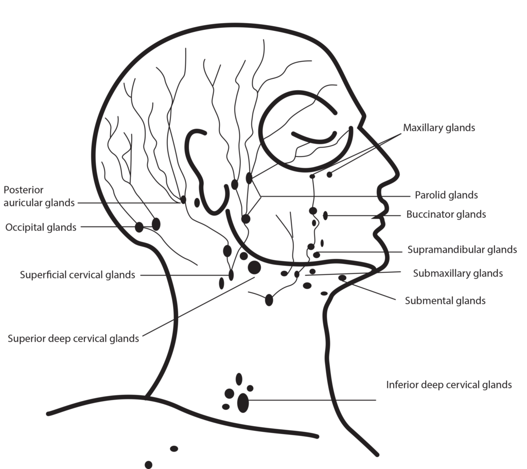 how to perform facial massage